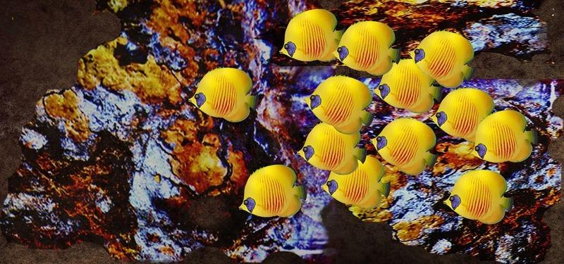 rainbow-reef-maldives