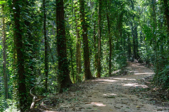 forest in kandy