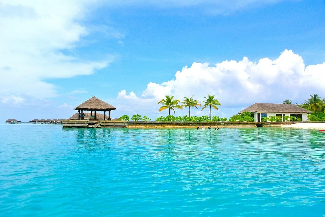 maldives-trees